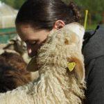 Schafpatenschaften übernehmen und Begegnungen fürs Herz erleben, beim Gnadenhof Live and let live.