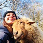Schafe schützen Tierpatenschaft verschenken