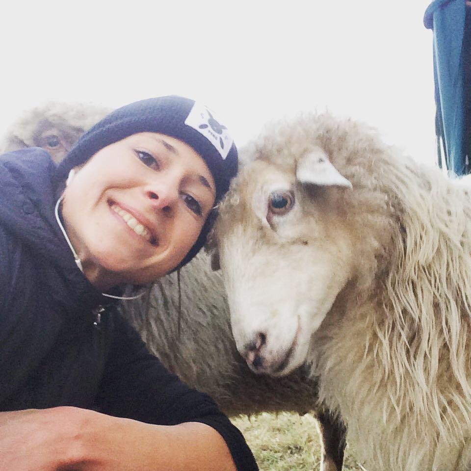 Jetzt eine Schafpatenschaft übernehmen für Schaf Schlitzohr - Tierschutz Heilbronn