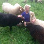 Tierschutz vegan Schafe