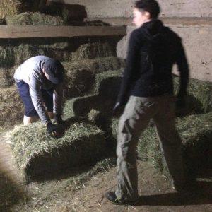 Genügend Futter für die Schafe trotz schlechter Heuernte