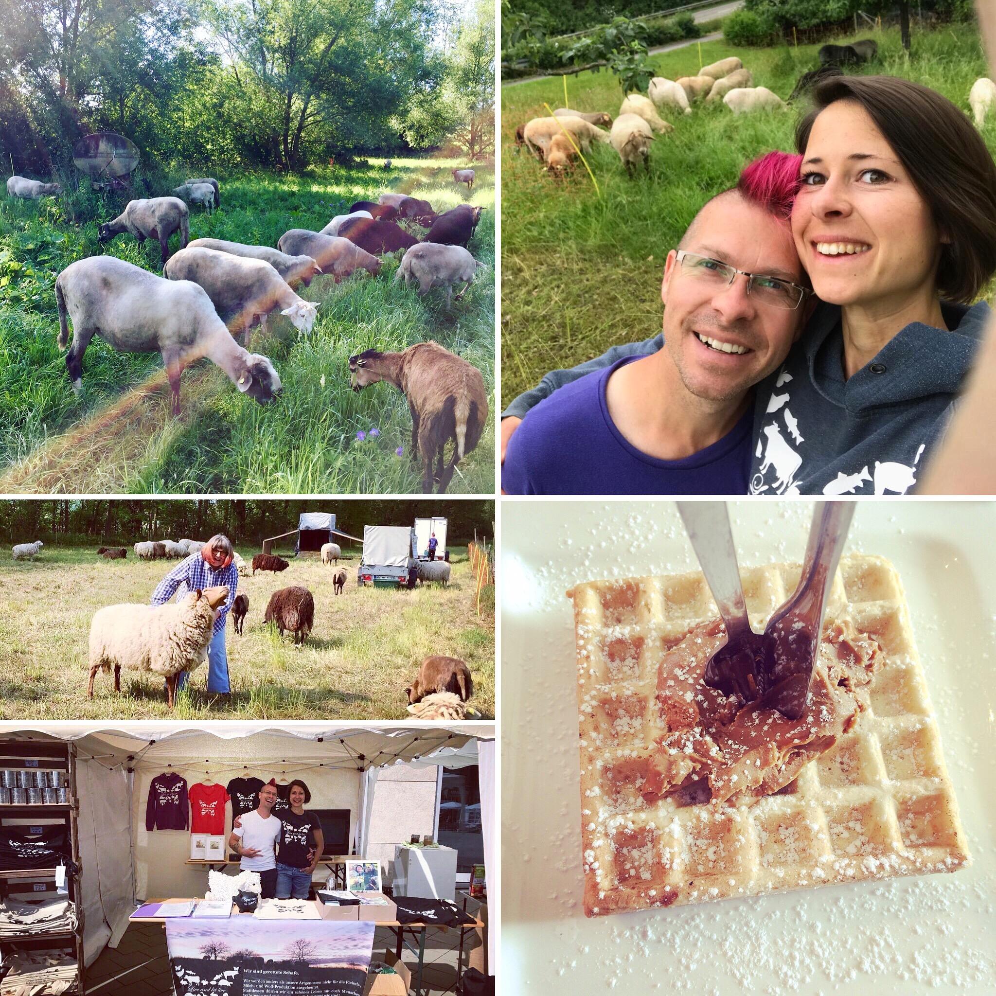 Live and let live bei Vegan im Quadrat - Jetzt Schafpatenschaft übernehmen!