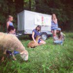 Kinder besuchen Schafe auf dem Gnadenhof Live and let live