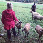 Dagmar und Jürgen beim Schafe besuchen und Schafe streicheln