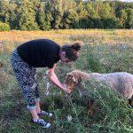Marlina besucht Patenschaf Pauline und die geretteten Schafe von Live and let live