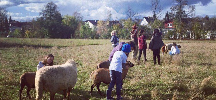 Der Lebenshof Live and let live in Schwaigern schafft Begegnungen zwischen Mensch und Tier