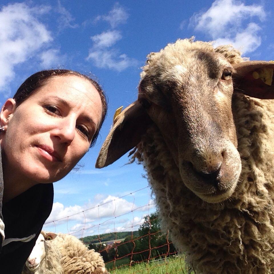 Tierpatenschaft verschenken zum Beispiel eine Schafpatenschaft bei Live and let live