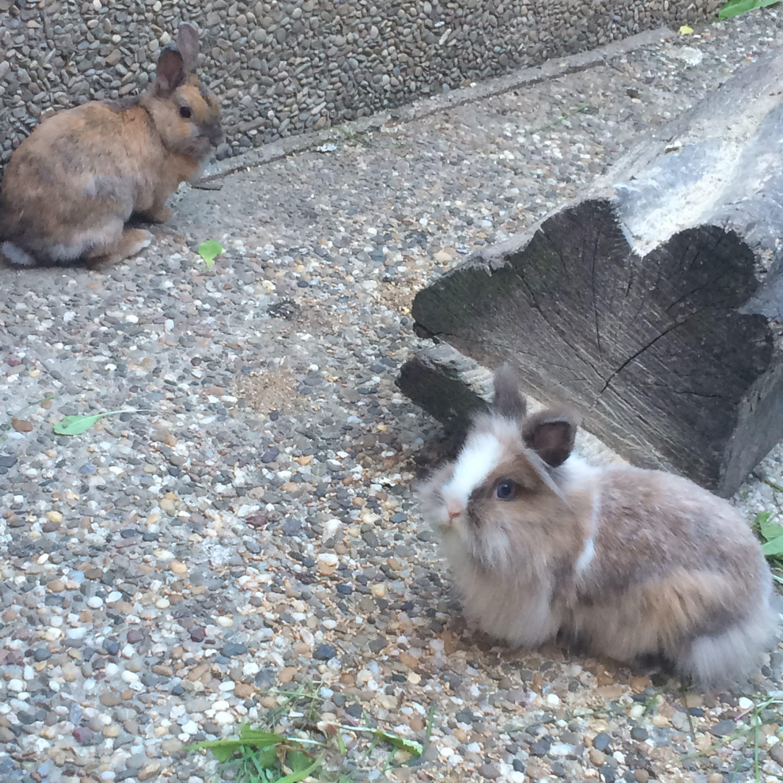 Die Kaninchen Hanni und Nanni
