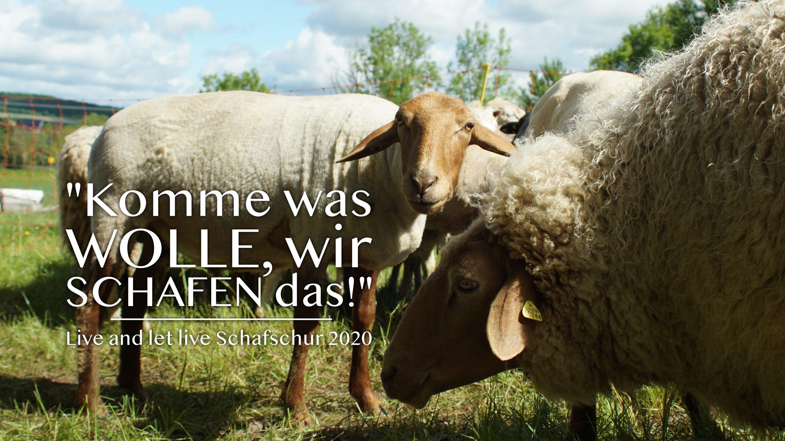 Live and let live Schafschur 2020: Komme was Wolle gemeinsam Schafen wir das! Tierschutz Schwaigern Banner
