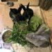 Kaninchenrettung in Schwaigern bei Live and let live Lebenshof